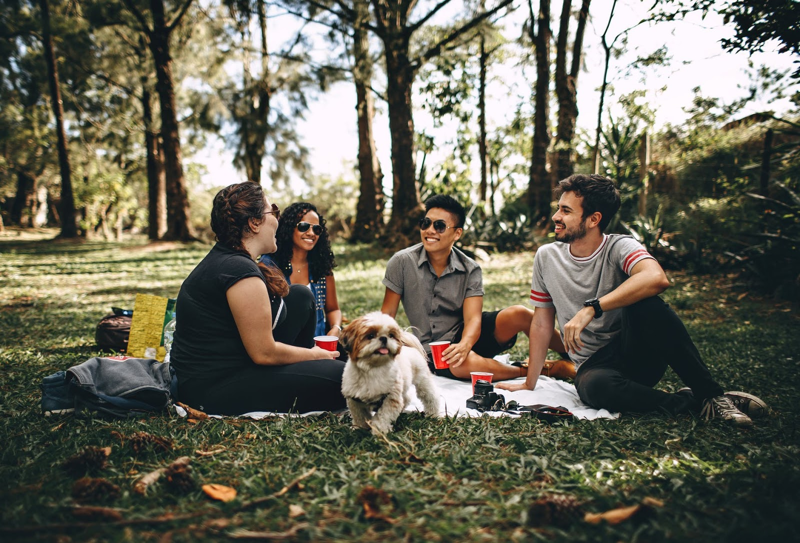 Four friends smiling and laughing with their dog while picnicing on a blanket in a park.