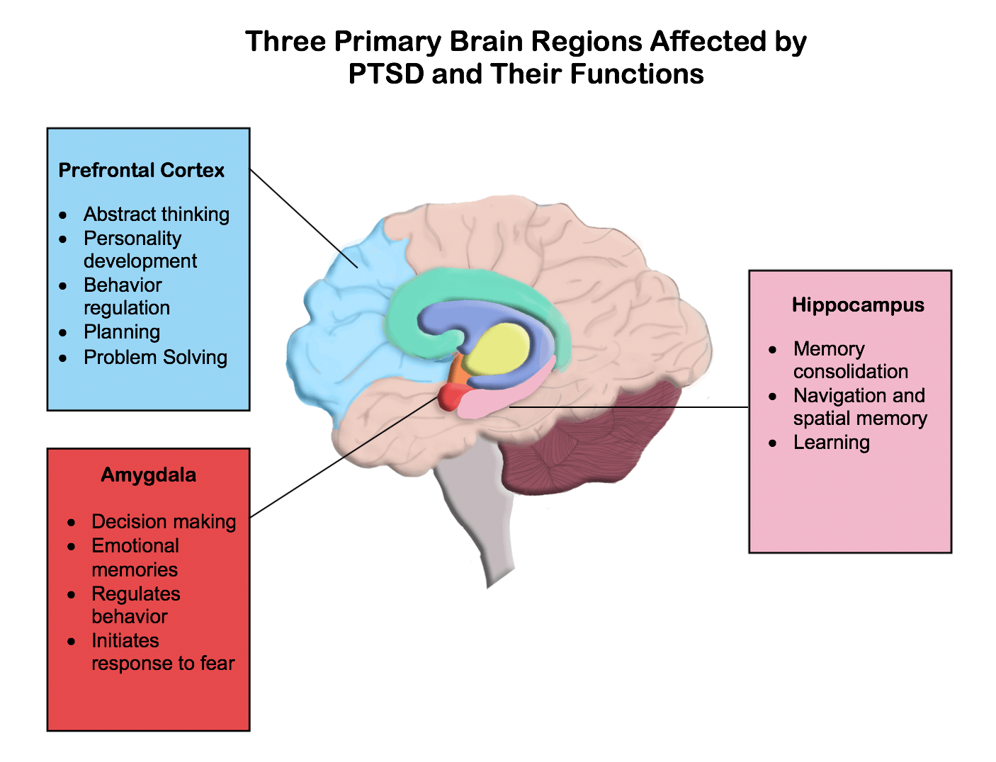 parts of the brain that ptsd affects