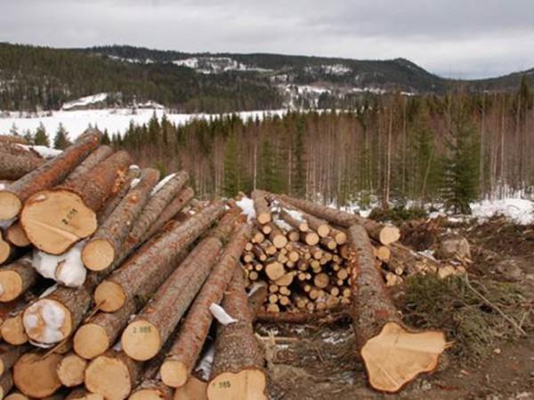 Skogen - Det grona guldet