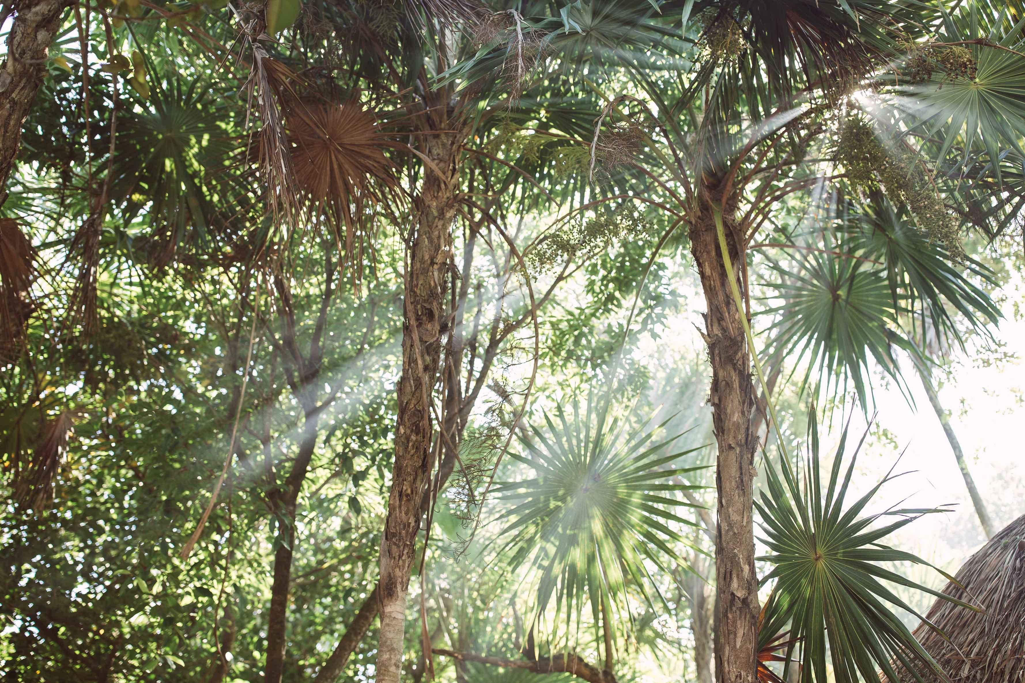 PPP Jungle