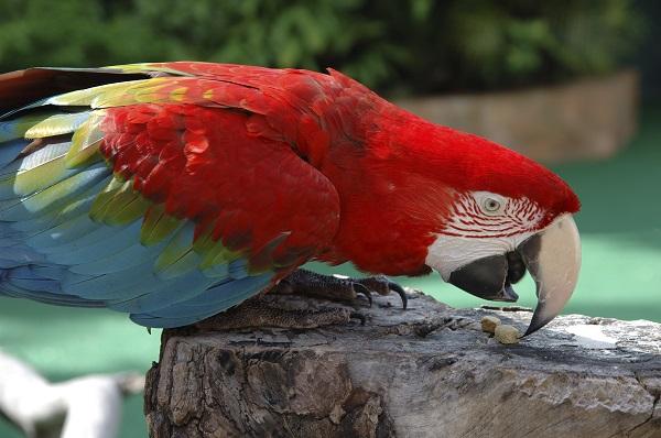 Parrot, Loro Park