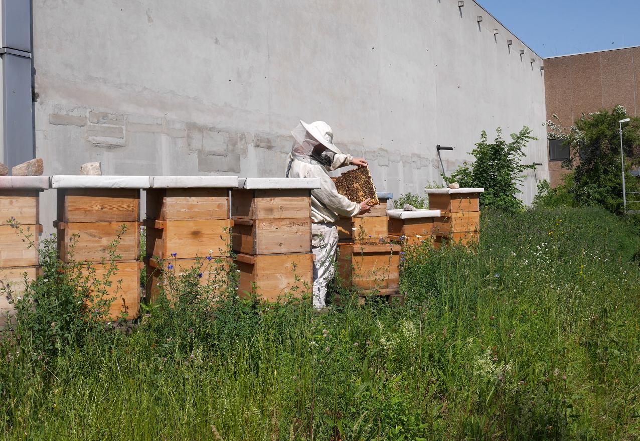 Durchsicht bei den Bienen