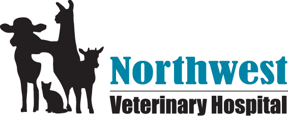 Search Results Web results  Northwest Veterinary Hospital