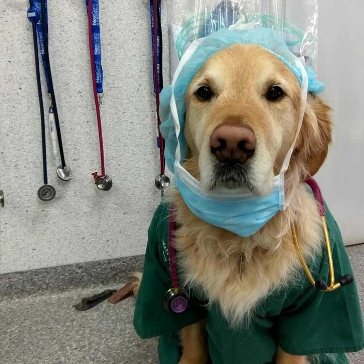 dog at the veterinary with mask and clothes and veterinary equipment