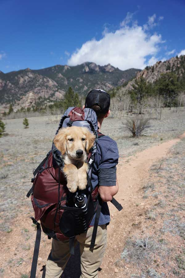 Man in the mountain with dog in backpack