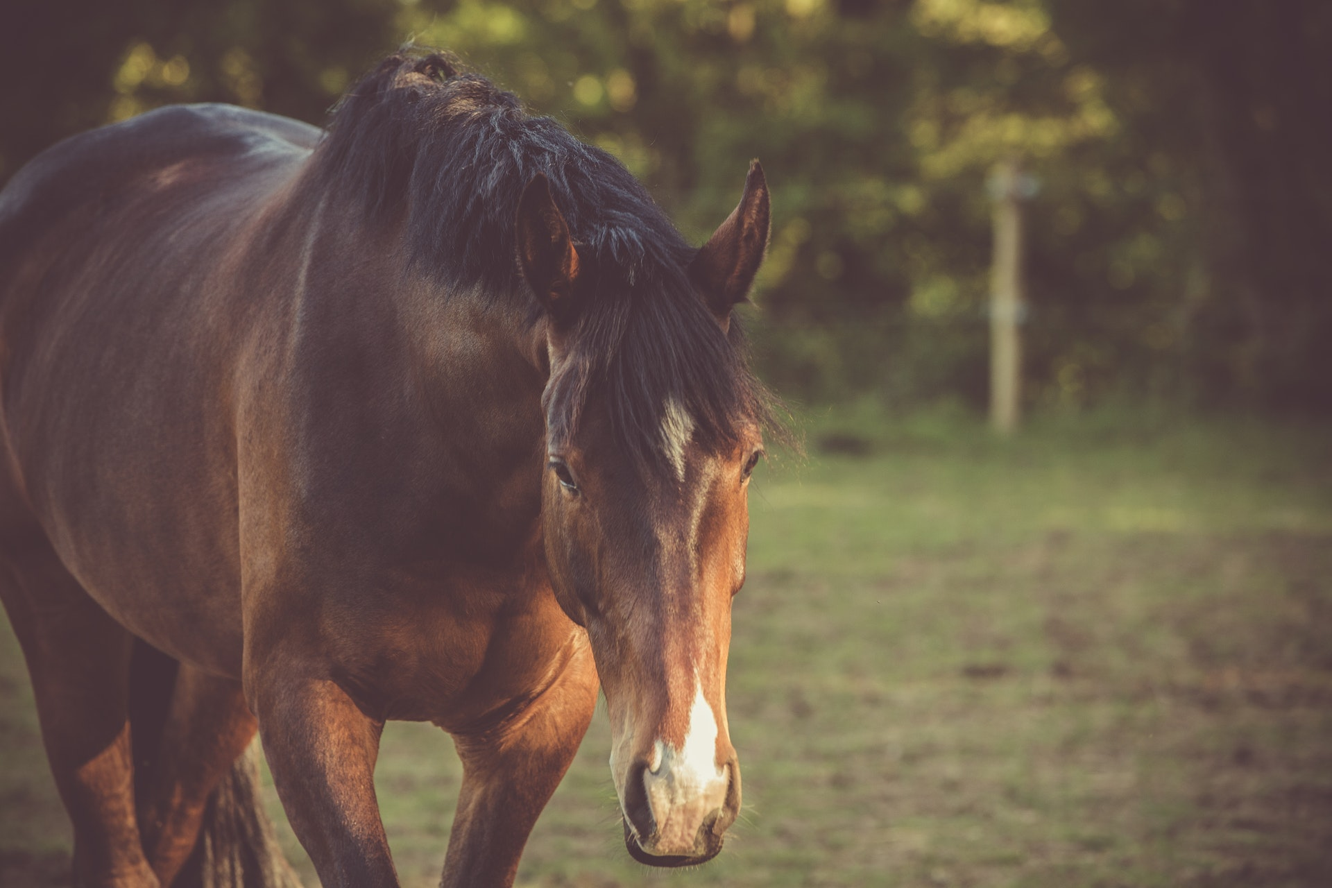 5 Essential Horse Wound Care Spray Tips