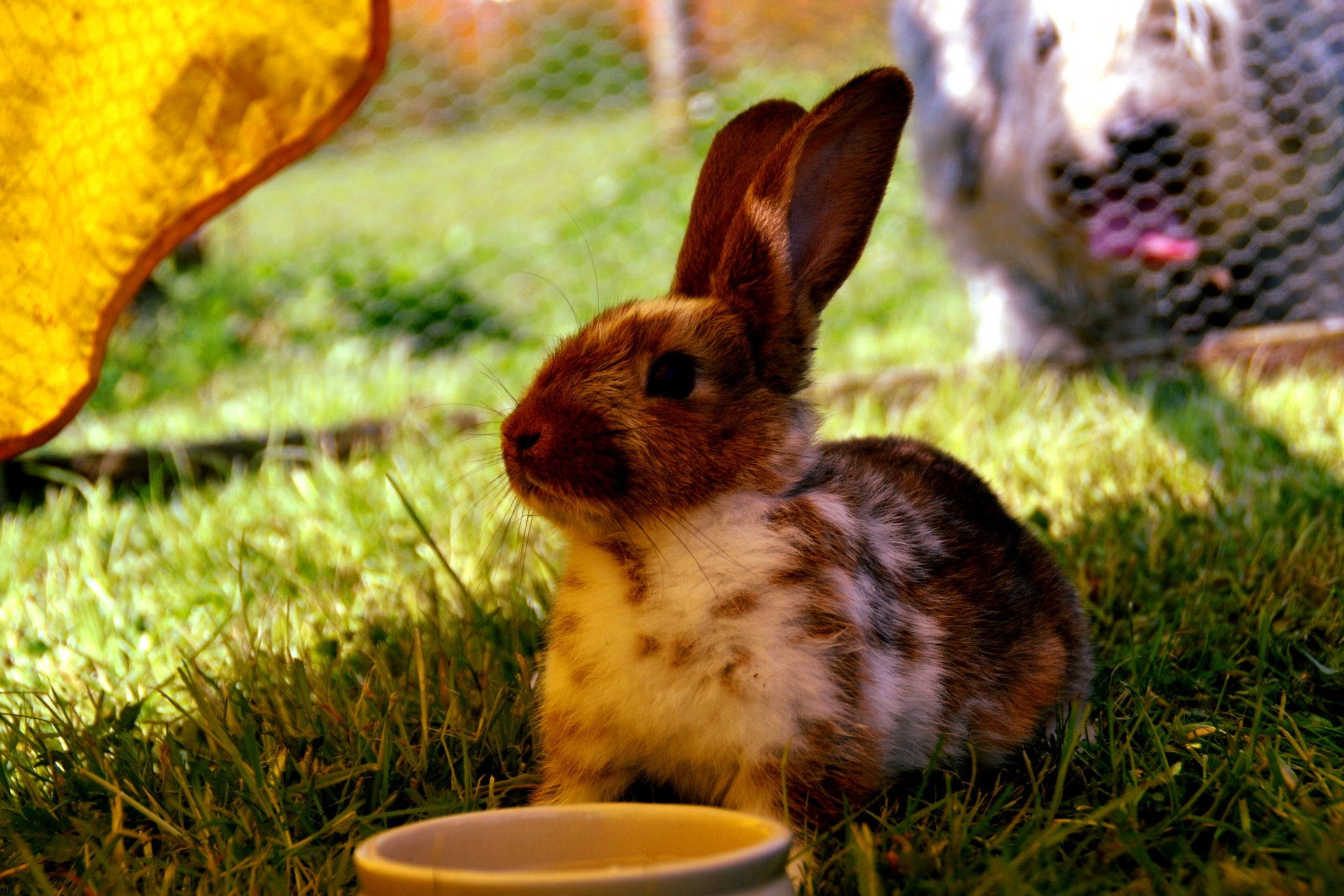 8 Enrichment Activities To Do With Your Rabbit