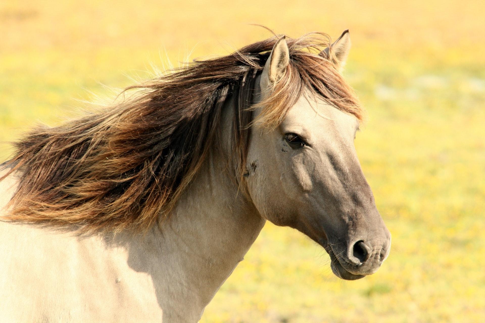 a white horse with a long dark mane
