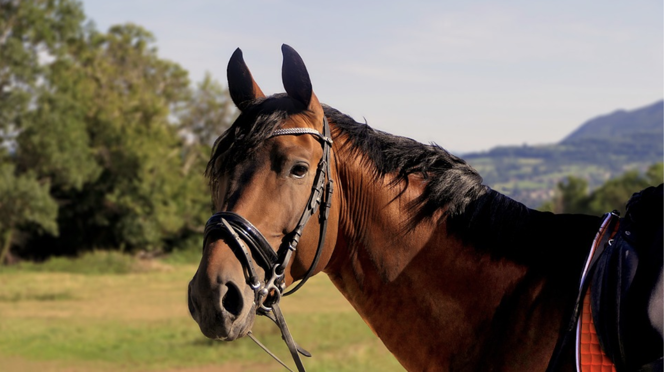 A Simple Guide to Top-Notch Horse Grooming