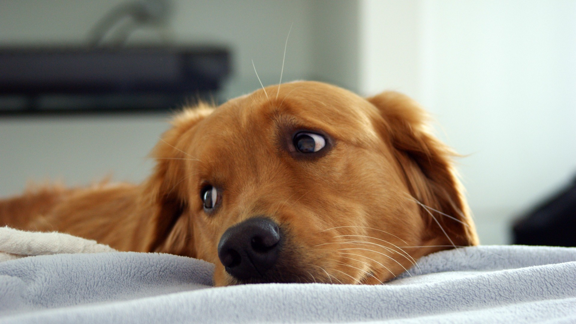 a puppy resting its head on a bed