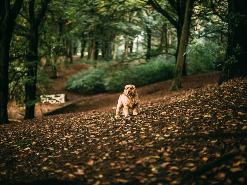 How to Identify and Treat Your Dog's Fungal Infection - Yeast and Ringworm