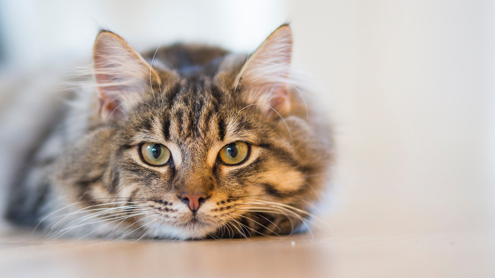 Keeping Kitty Safe: Avoiding and Treating Minor Abrasions