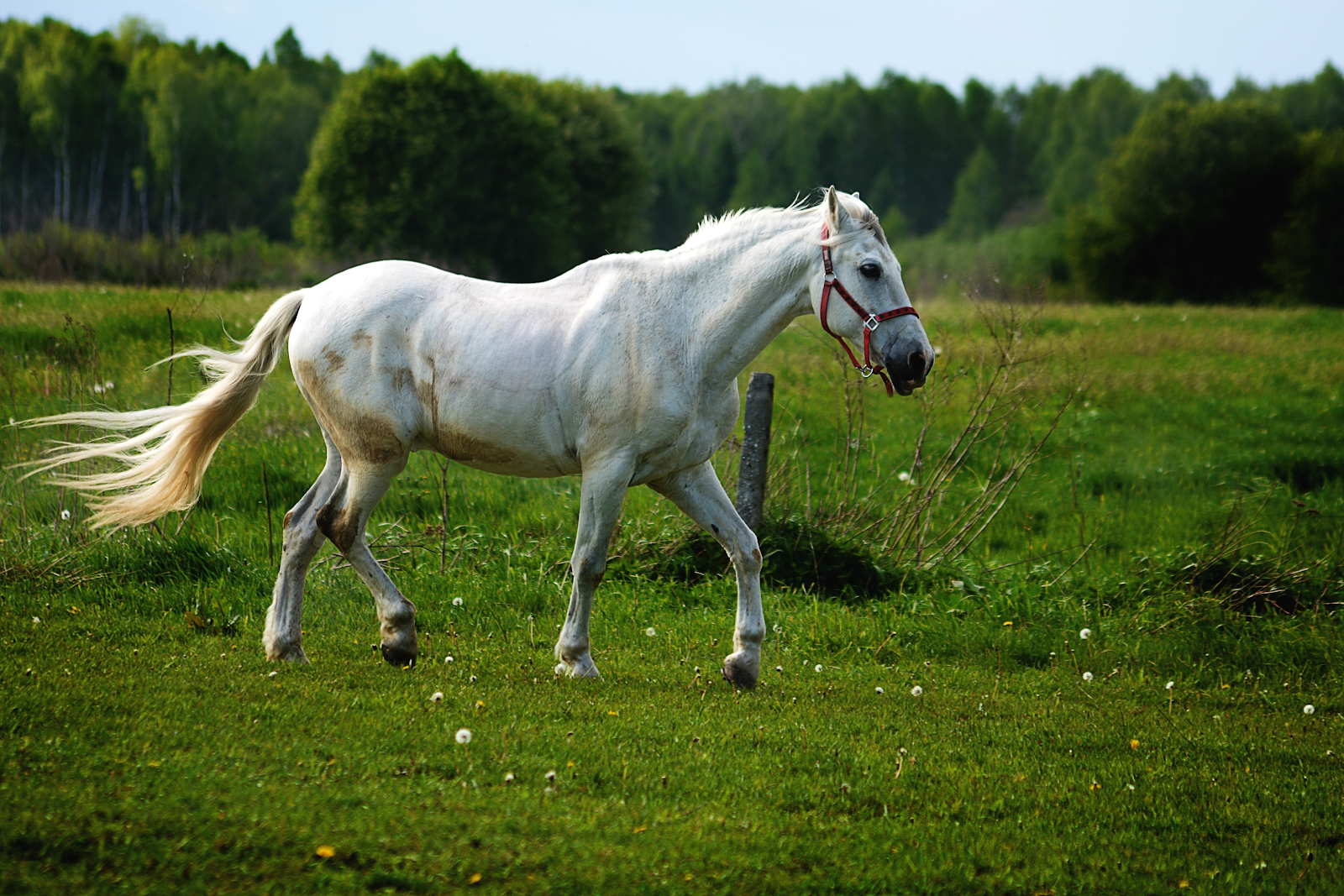 No Ifs, Ands, or Cuts About It: Preventing Cuts on Your Horse