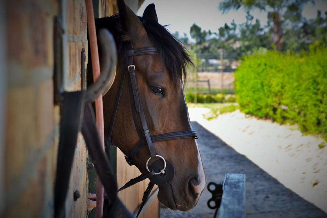 Silver Spray to Hoof Picks: Everything You Need to Treat Your Horse's Injuries on the Road