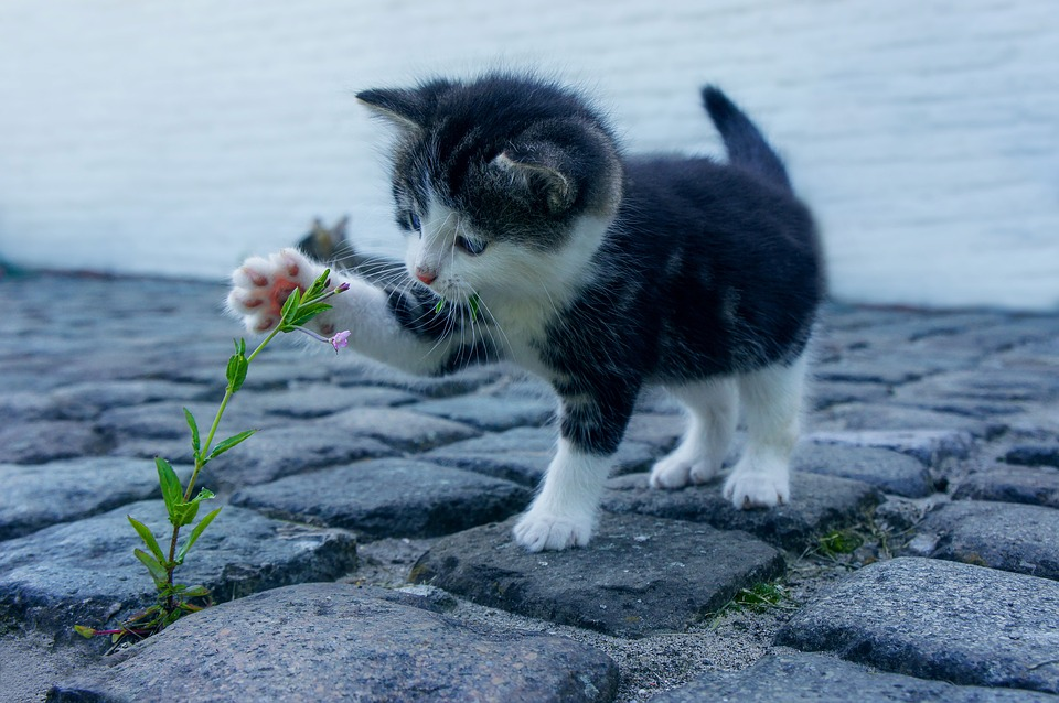 kitten plays with weed outside