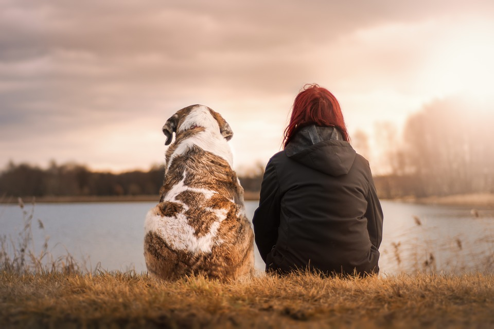 dog and owner watch the sunset together