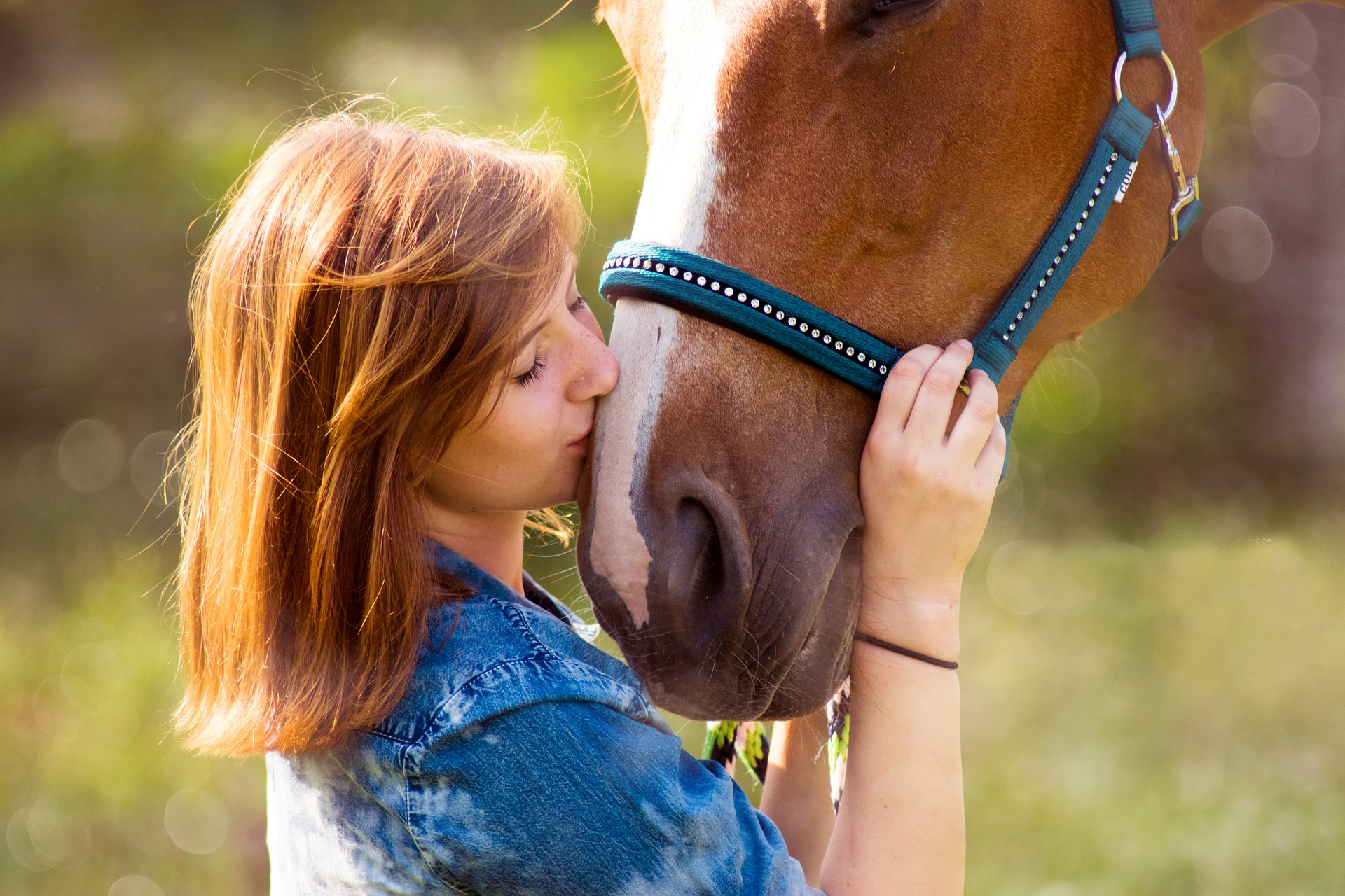 3 Common Horse Injuries And How To Treat Them
