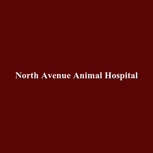 North Avenue Animal Hospital