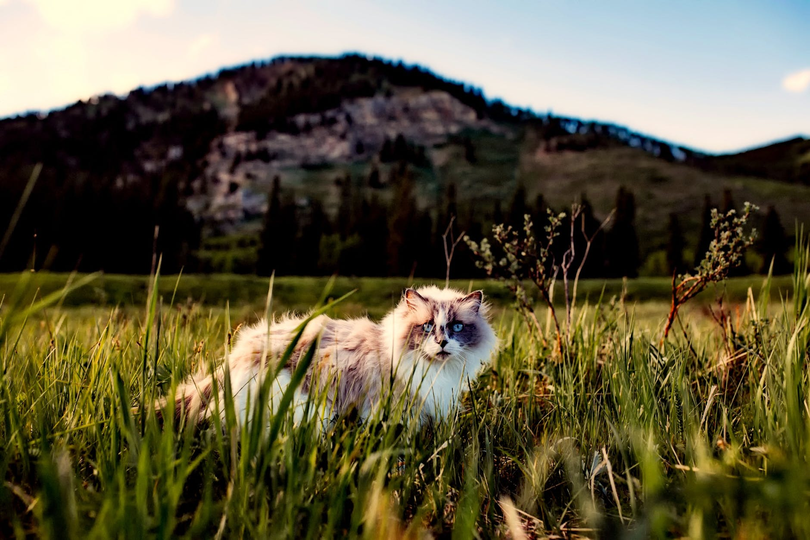 cat outside in tall grass