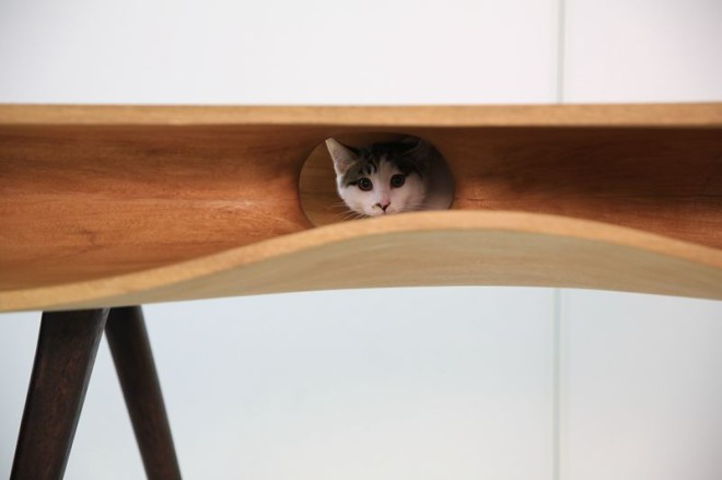 cat peeking from inside wooden furniture