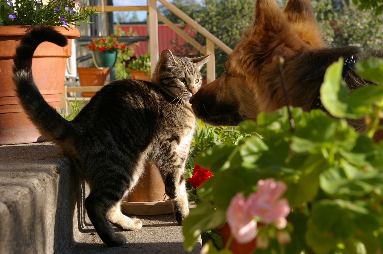 dog stares at scared cat with hunched back