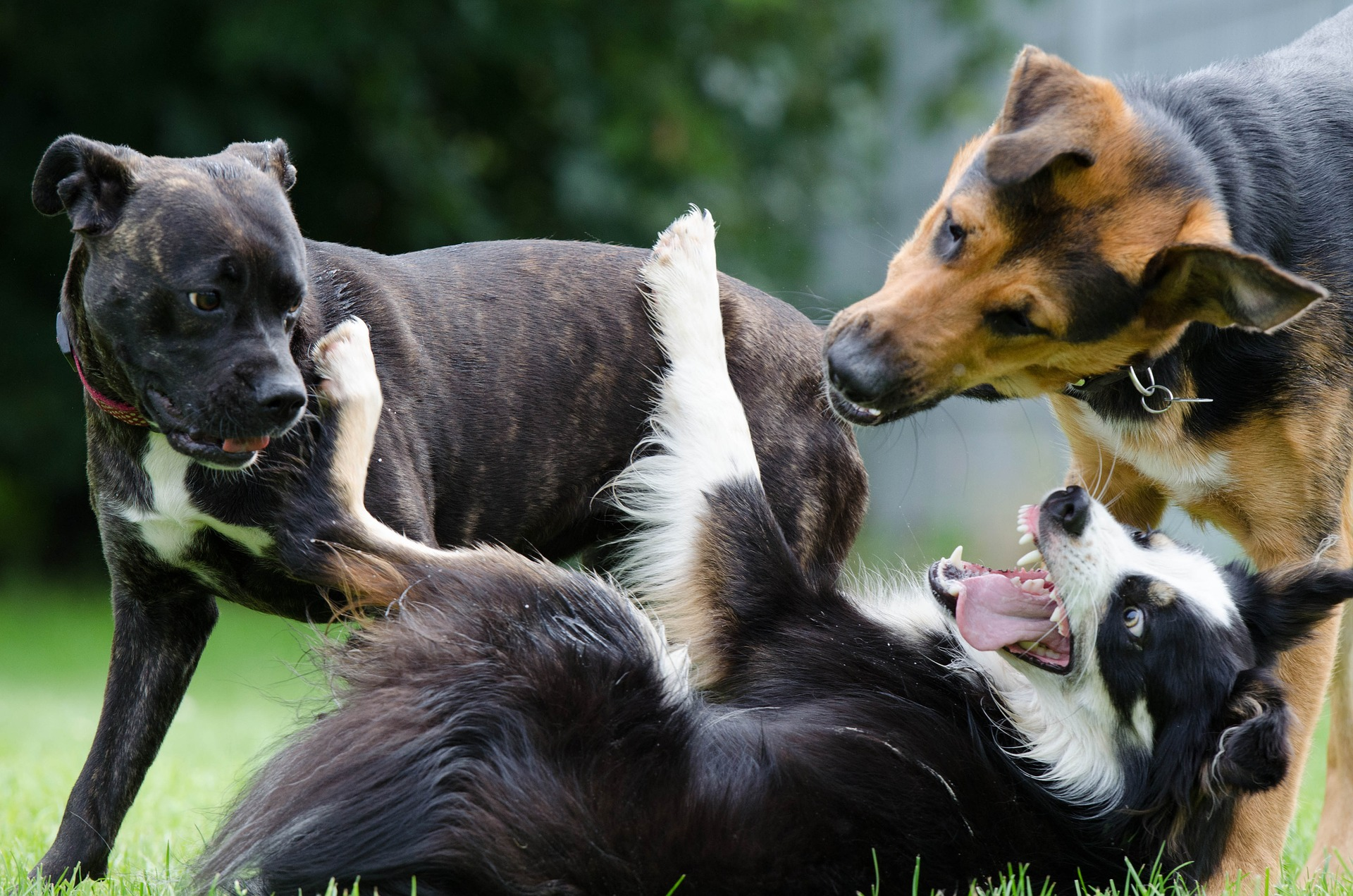 What to Do When Your Pet Gets Into a Fight