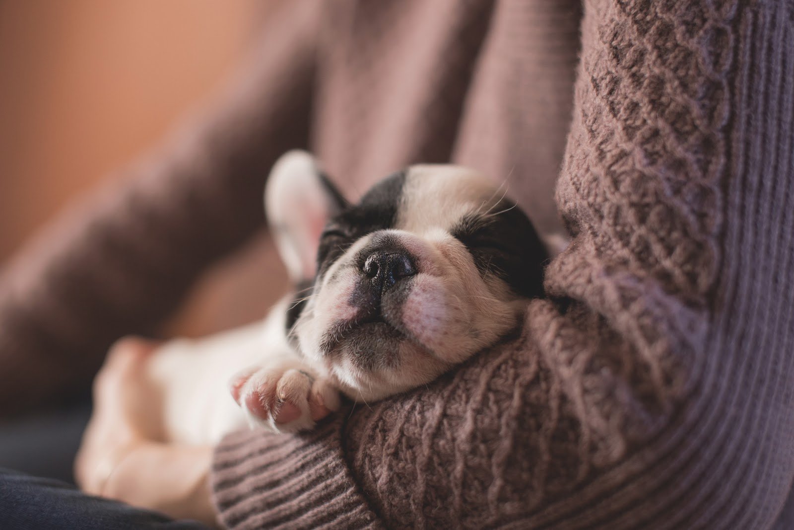 puppy sleeping in arms of owner
