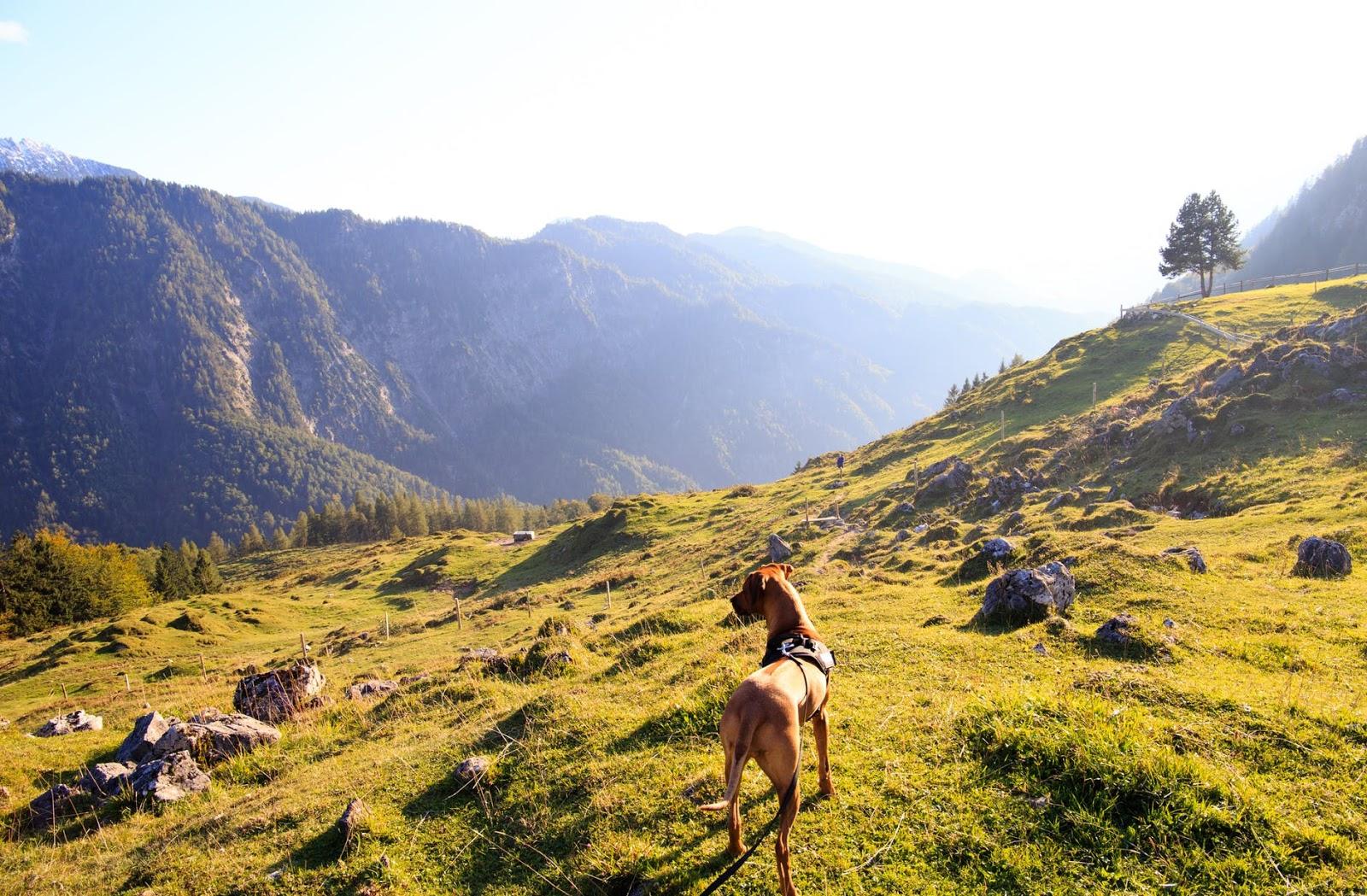 dog in open mountain range