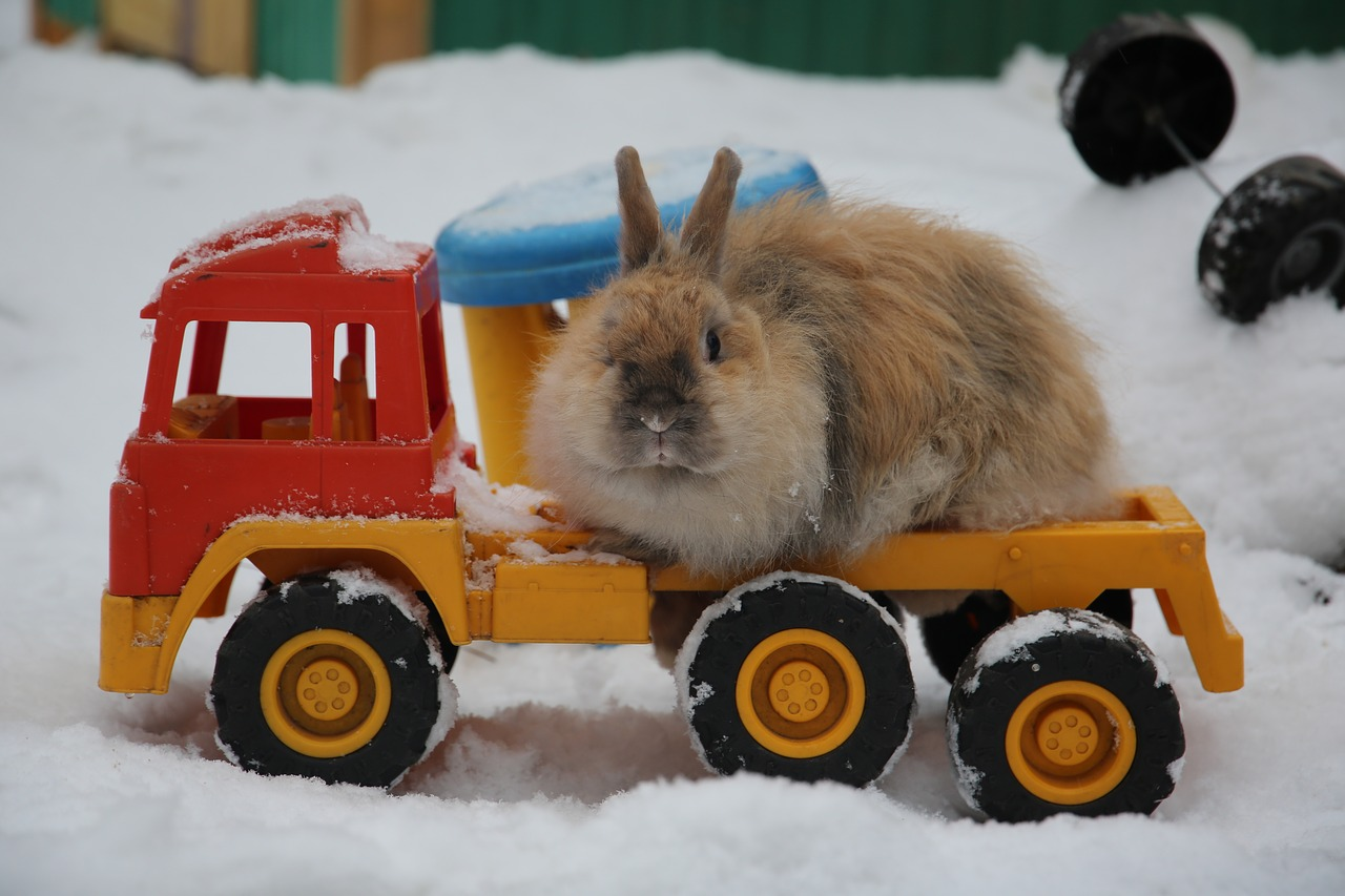 rabbit on toy truck