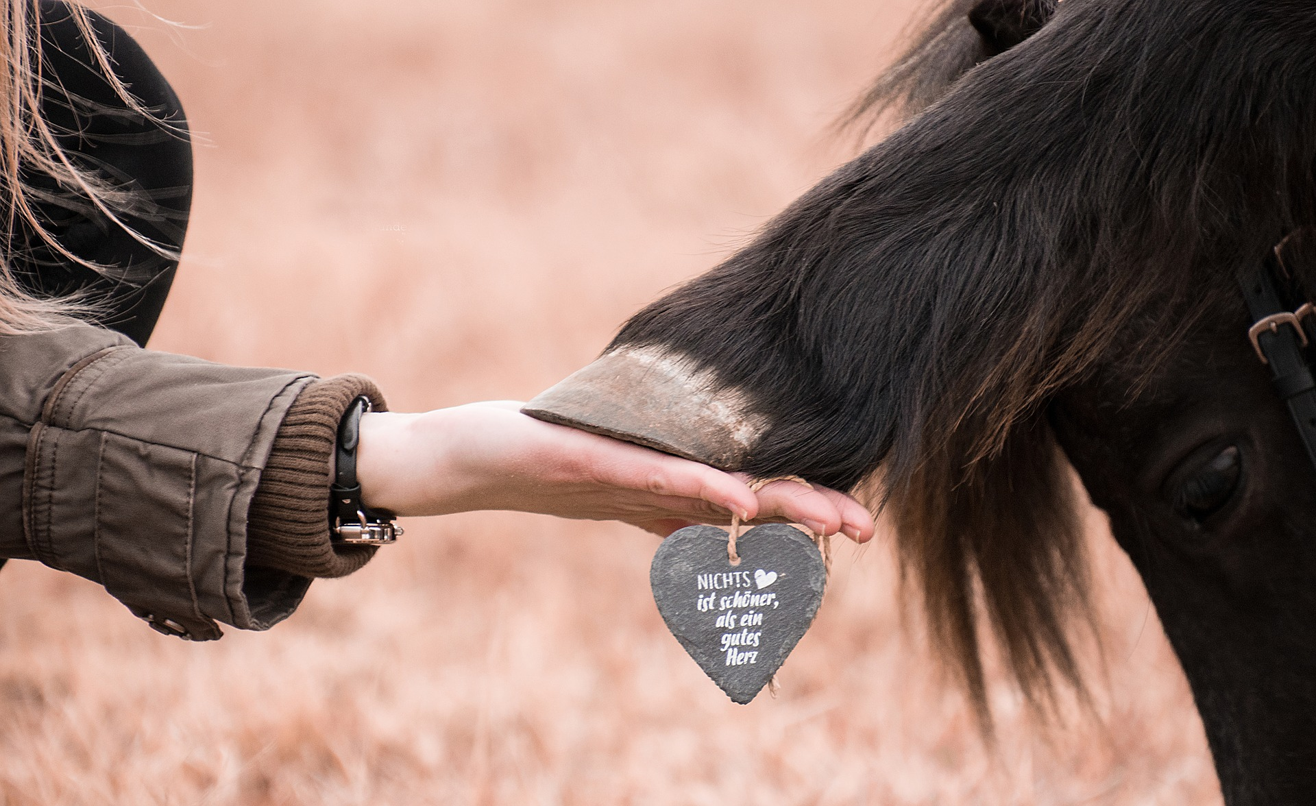 a woman holding a horse's hoof