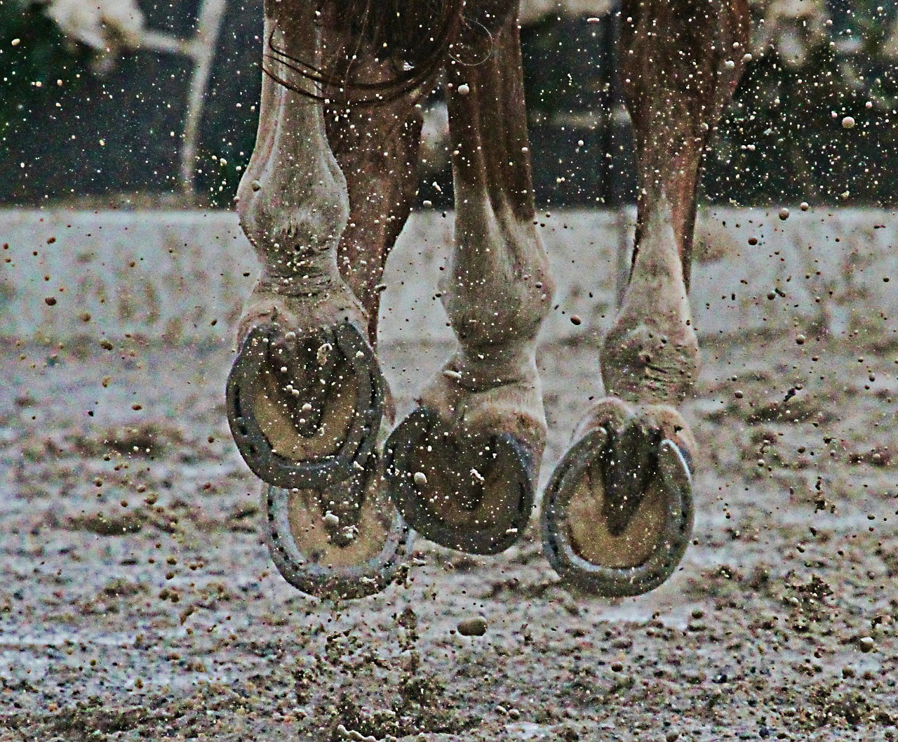 horse hooves with horseshoes galloping through mud