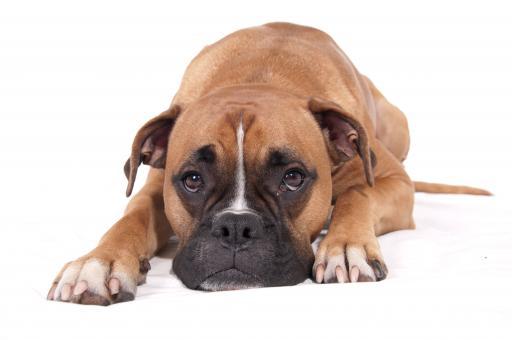 sad-faced dog laying on ground