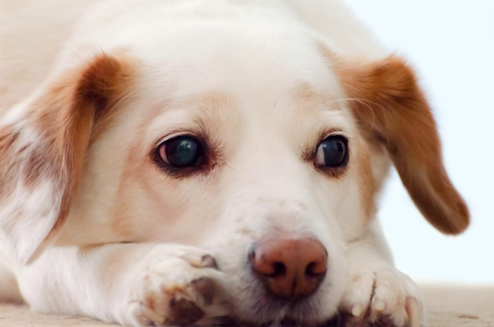 sad puppy looks away