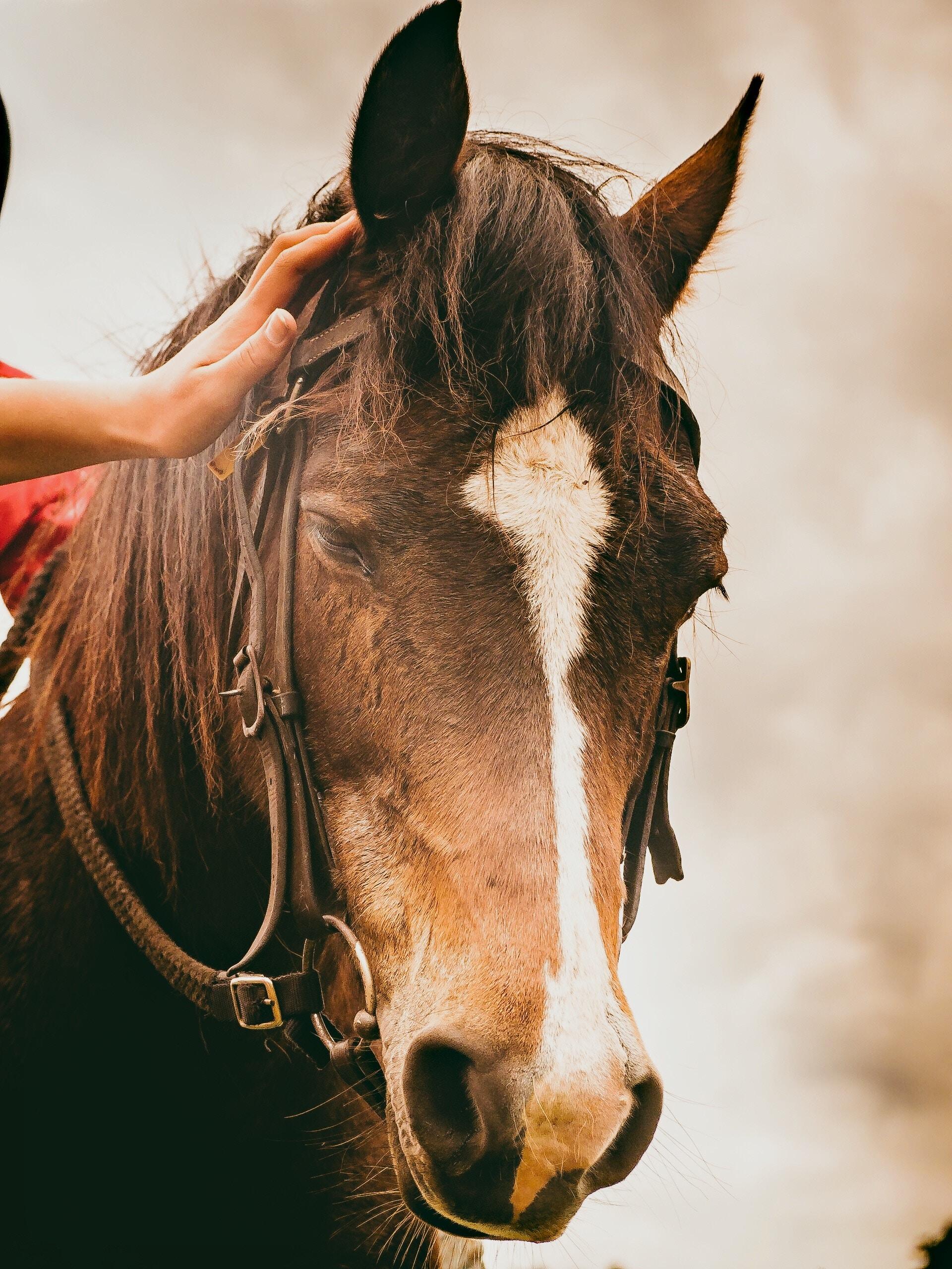 hand touching & scrutinizing horse