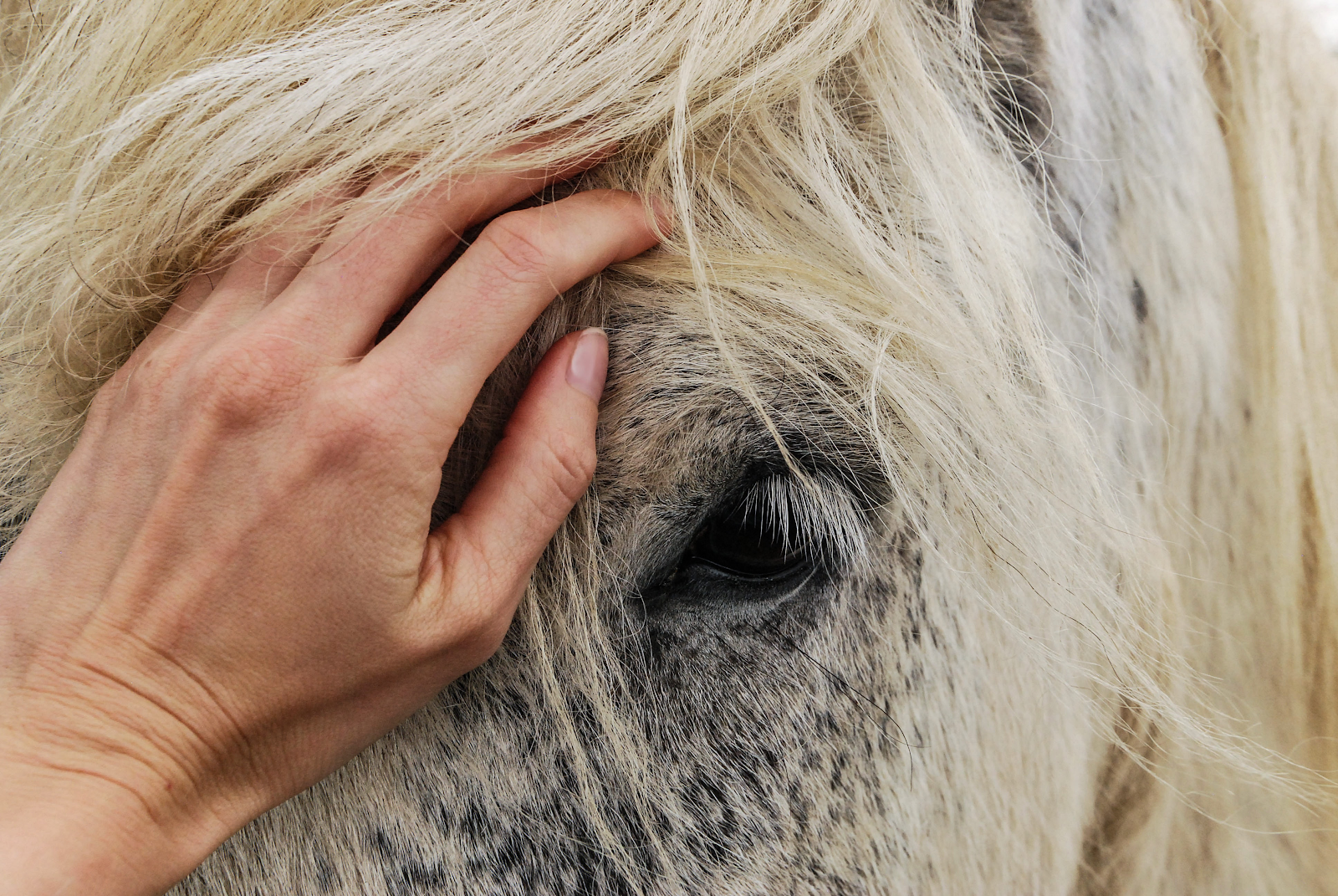 hand on horse's face