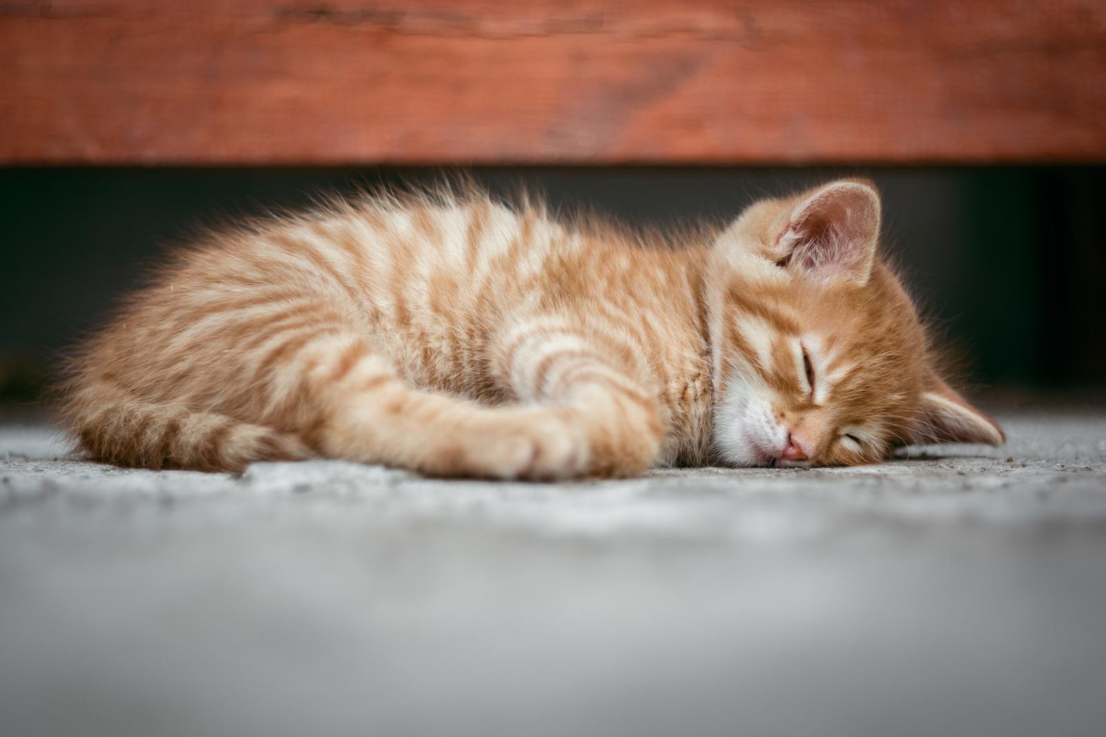 kitty sleeping & relaxing on floor
