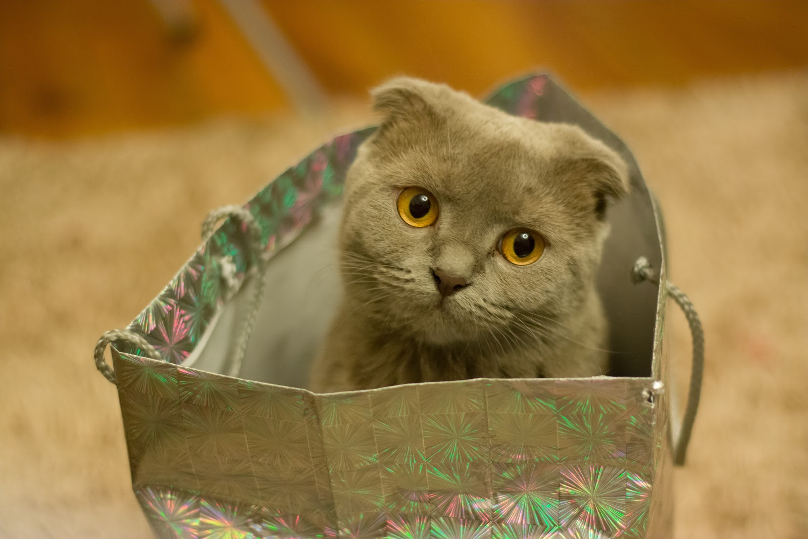 gray cat in silver gift bag
