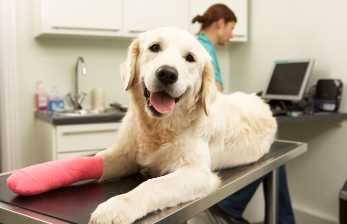 injured dog laying on vet table