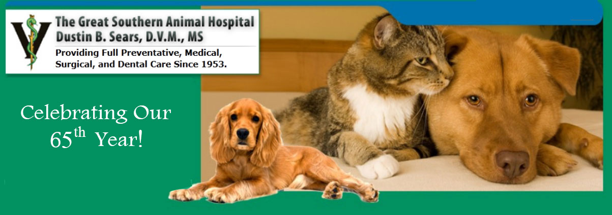Great Southern Animal Hospital banner