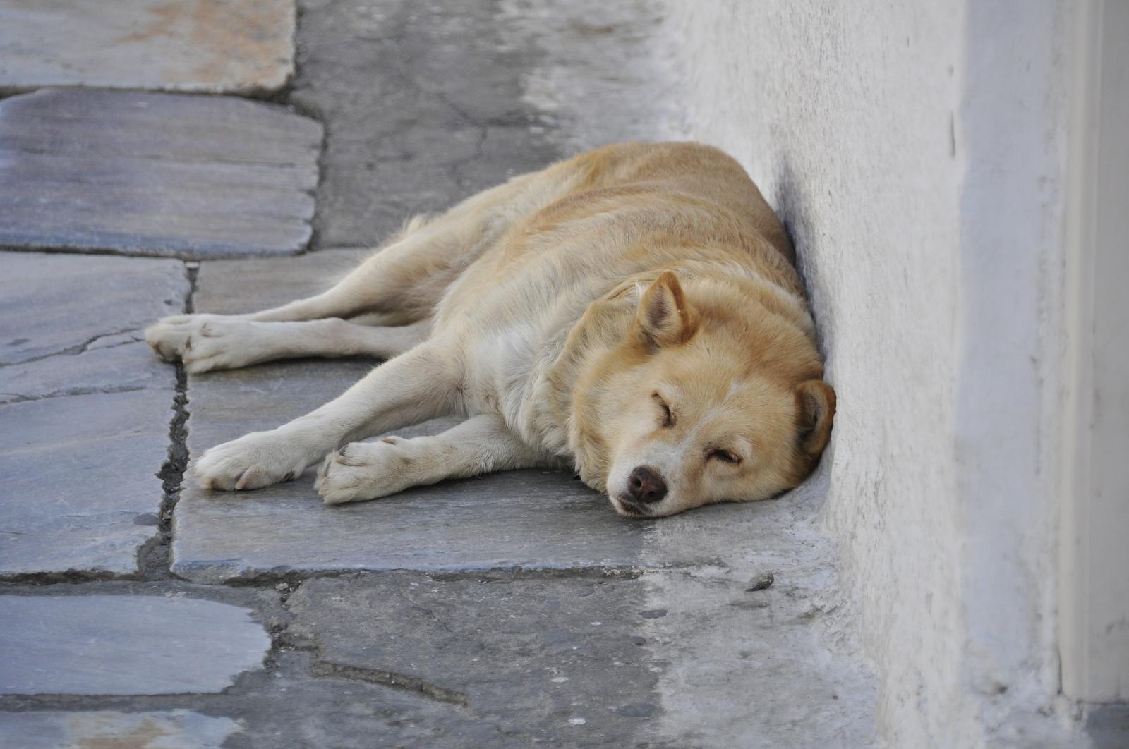 dog sleeping outside in shade