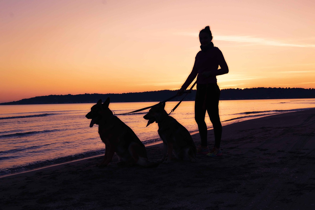 girl walking dogs at sunset on beach
