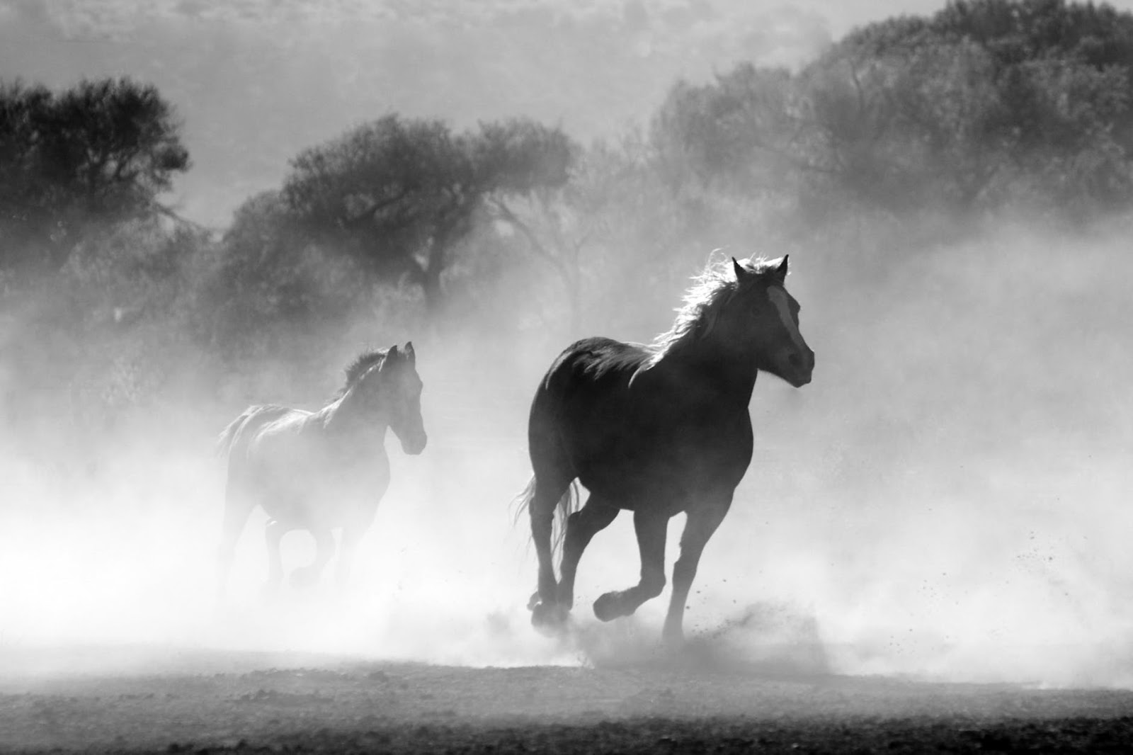 horses galloping through dust