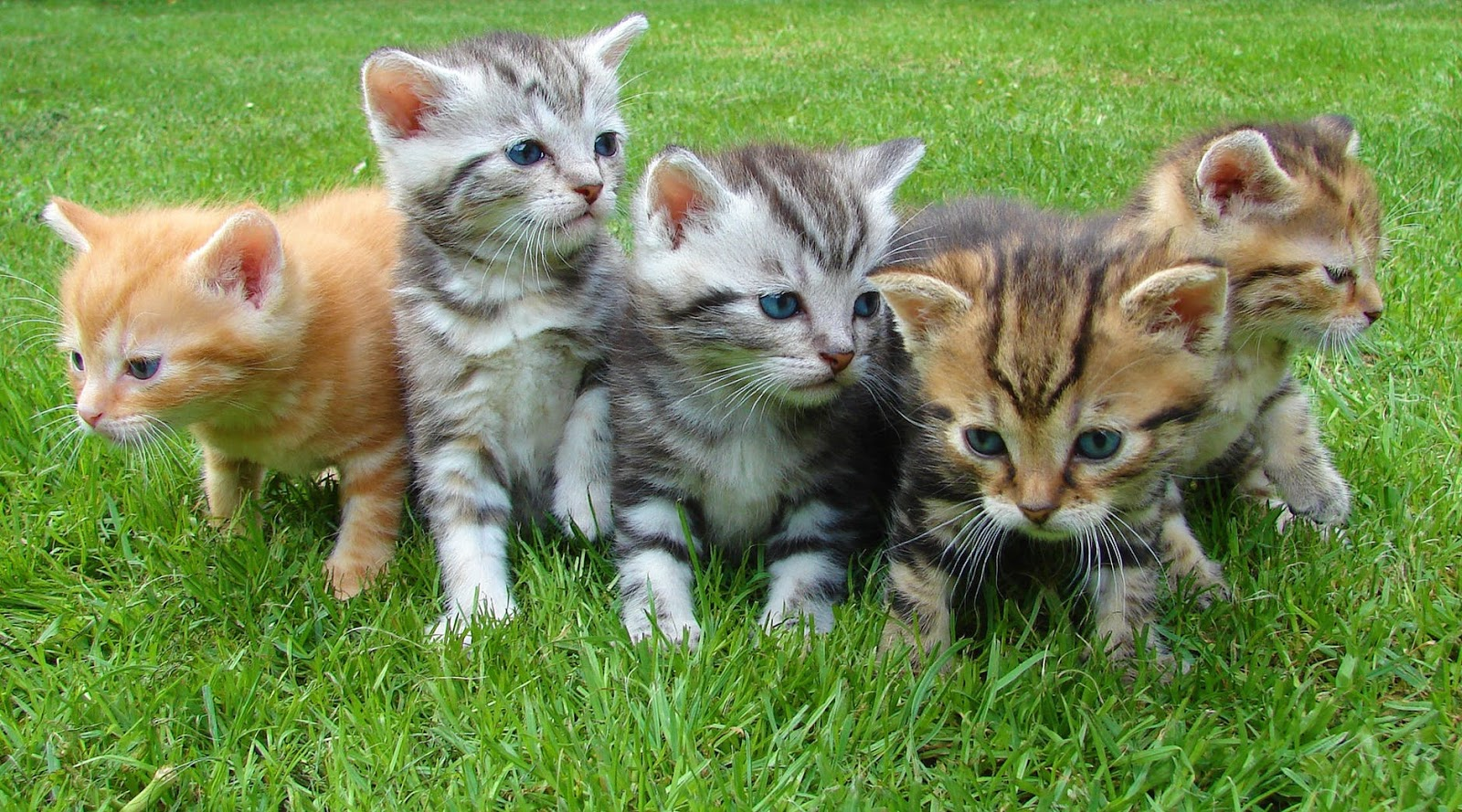 kittens outside in the grass