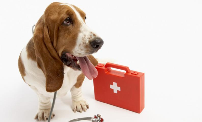 dog sitting next to first aid kit
