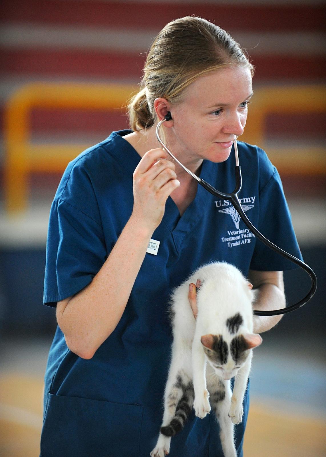vet listening to cat's heartbeat