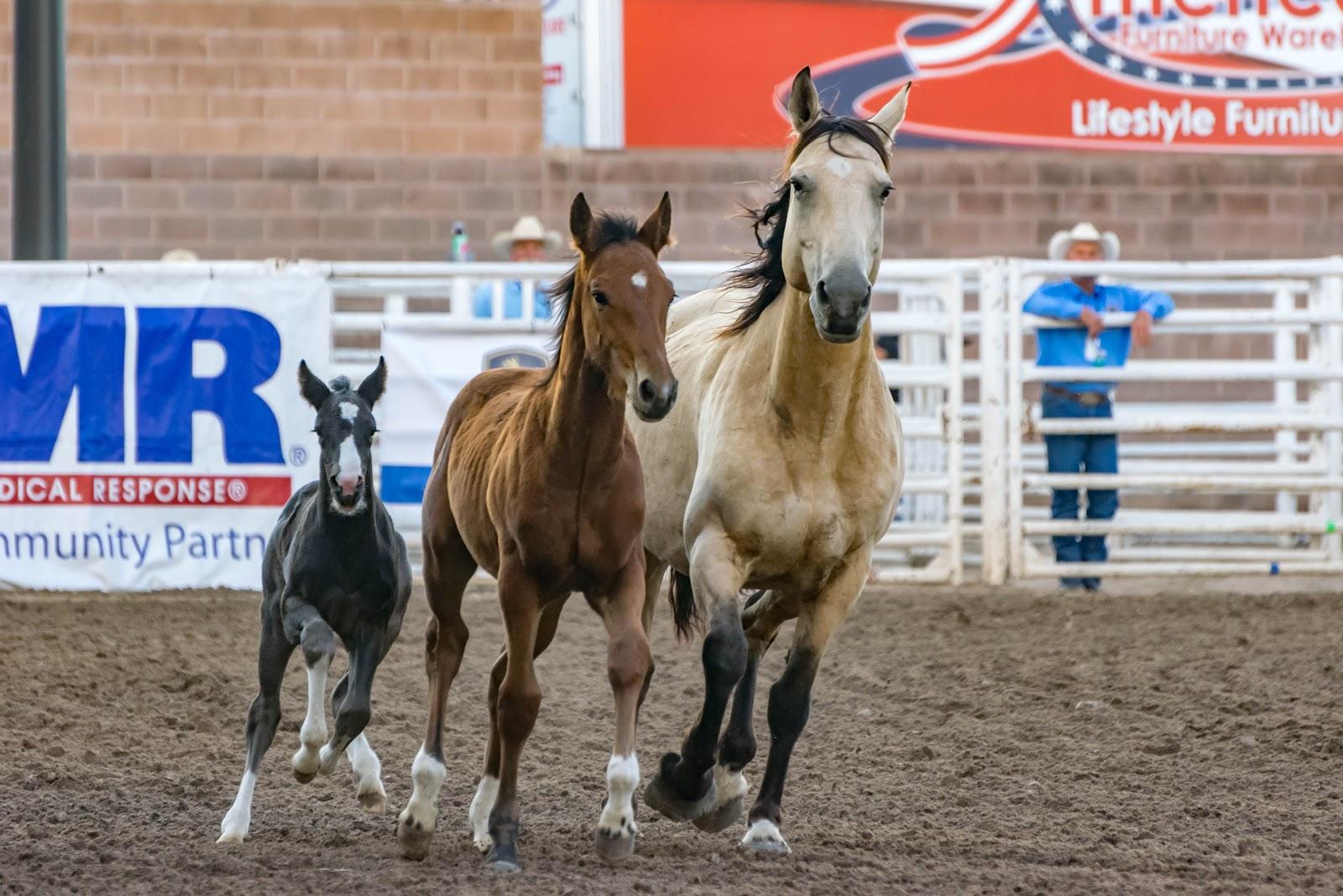 small, medium & large horse