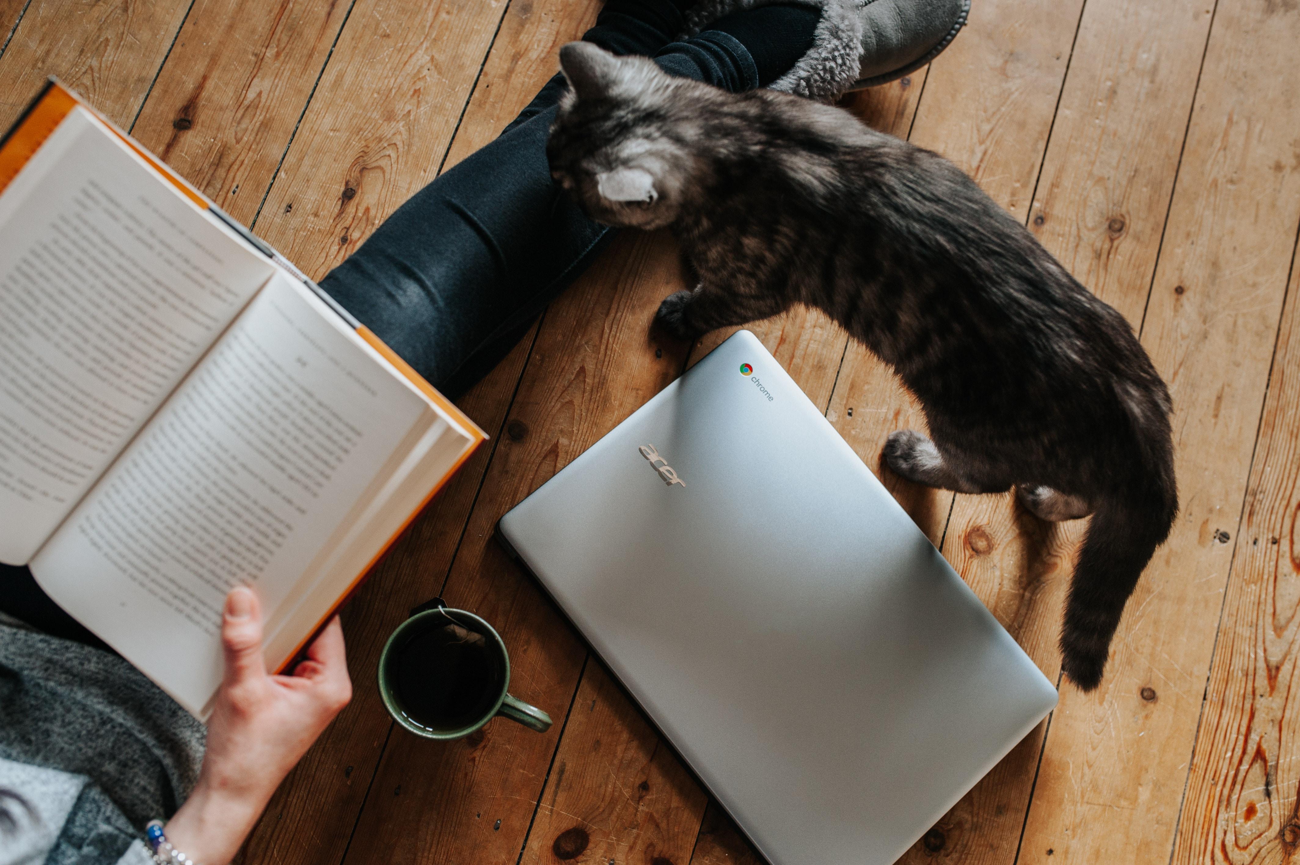 girl reading book next to kitten