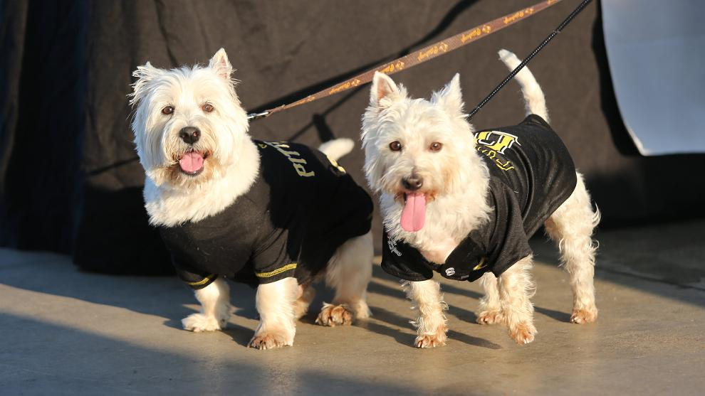 Dogs at Pup Nights at PNC Park