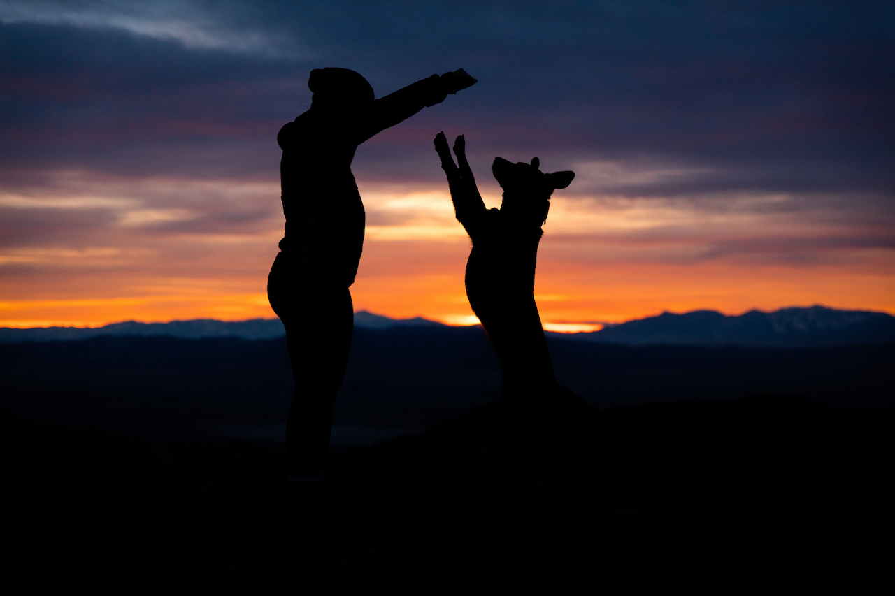 silhouettes of dog & owner jumping together