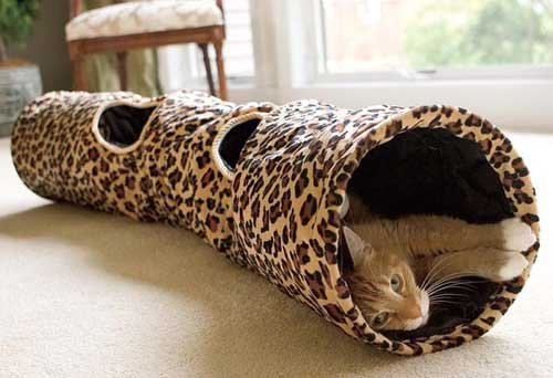 cat rolling in cat tunnel